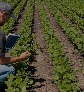 Man with tablet in soybean field.