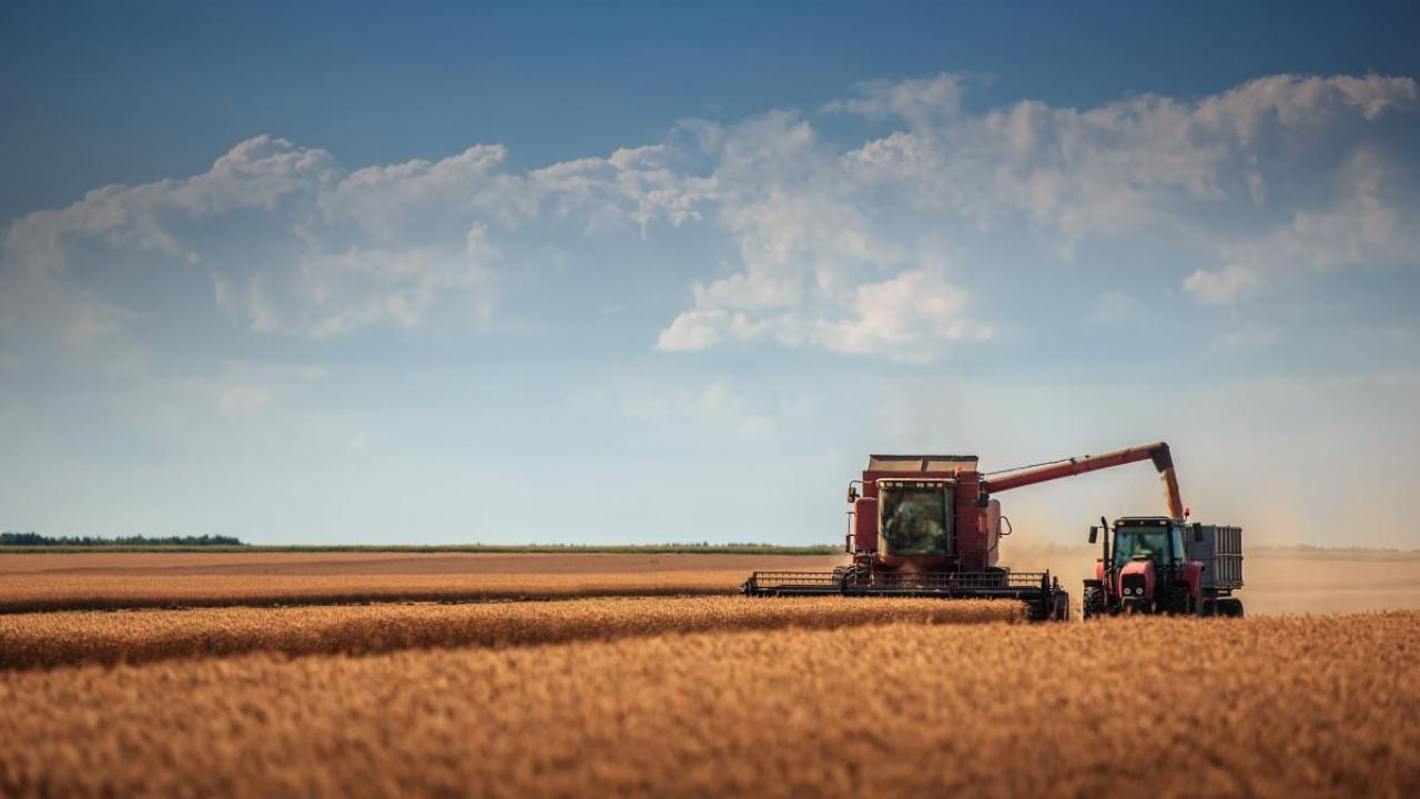 Combine and truck harvesting wheat.