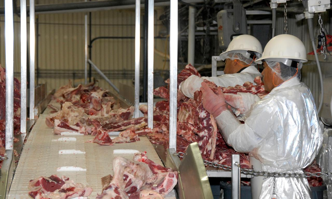 Workers separate beef parts in packing facility.