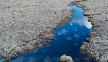 Frost on pond in Yellowstone Park.