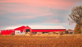 Two red barns in fall field.