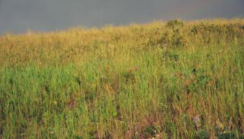 Wild grass and flowers.